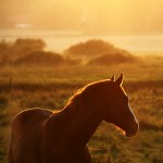 Equine Therapy Programs