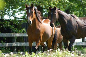 Horse as Teacher - Capacity to elevate human spirit