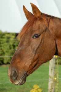 Equine Facilitated Learning Program