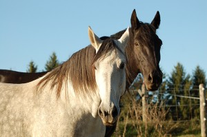 Equine Therapy Certification Program