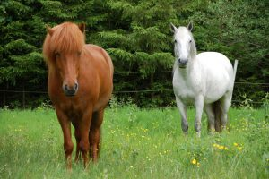 Are Horses Conscious Beings - Horse Spirit Connections Blog