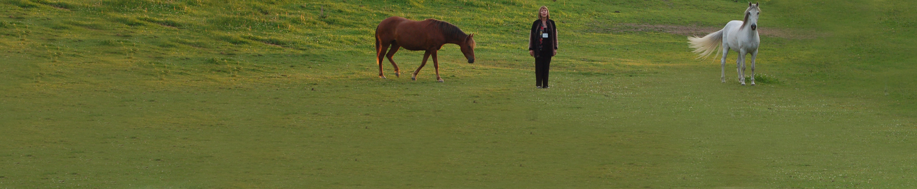 Equine Assisted Therapy Programs