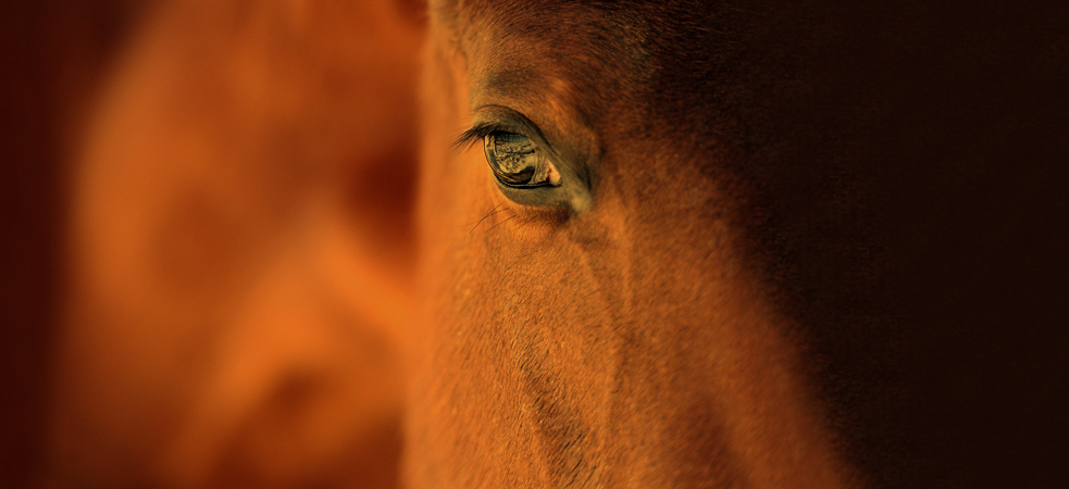 Horse Spirit Connections