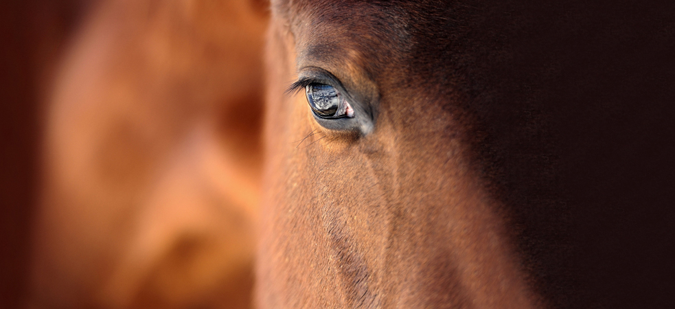 Equine Assisted Therapy - Horse Spirit Connections