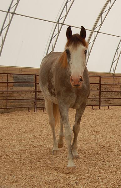 horsearena
