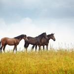 horseqt