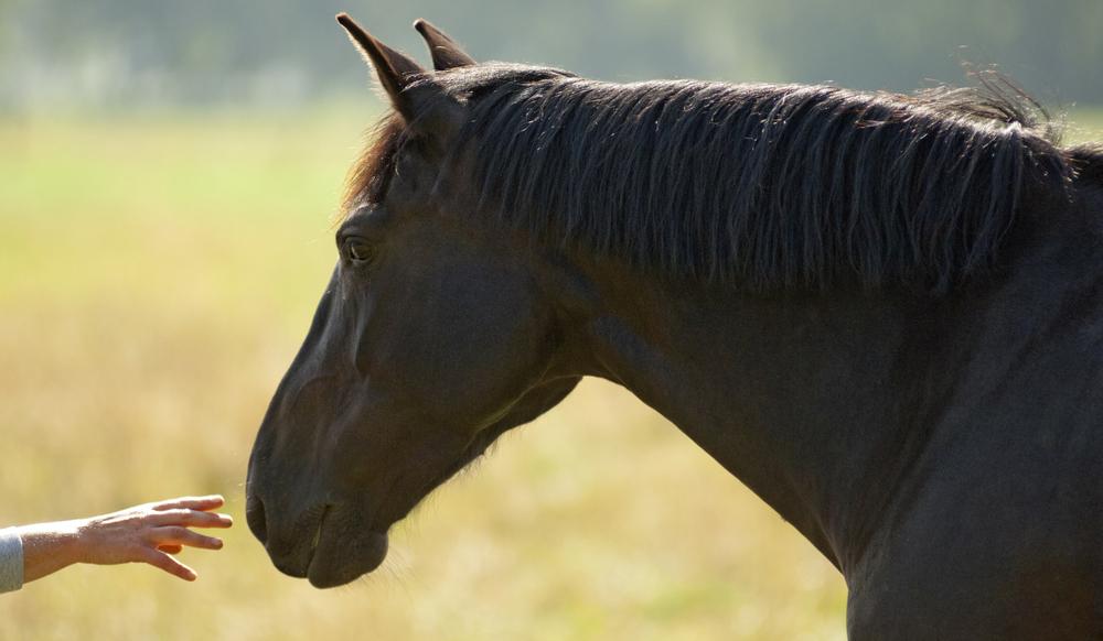 horsetouch